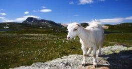 Nationalpark in Norwegen