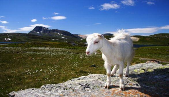 Tierwelt Norwegens